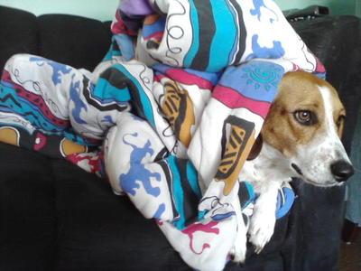 Cuddlepup